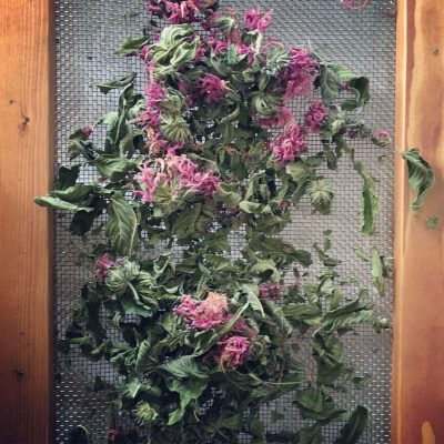 How to Make a Herb Screen