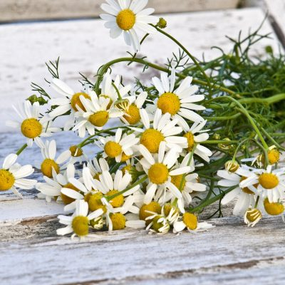 Chamomile Recipe Roundup